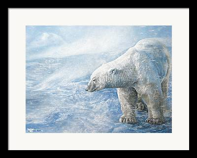 Polar Bear Lone Male Framed Prints
