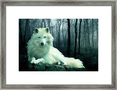 Arctic Wolf Framed Print by Julie L Hoddinott