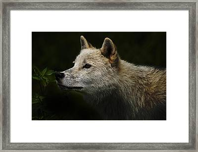 Framed Print featuring the photograph Arctic Wolf Portrait by Michael Cummings