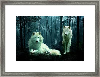 Arctic Wolves Framed Print by Julie L Hoddinott