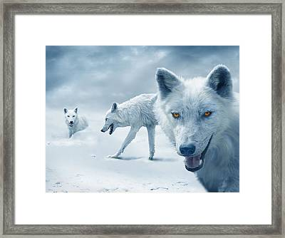 Arctic Wolves Framed Print by Mal Bray