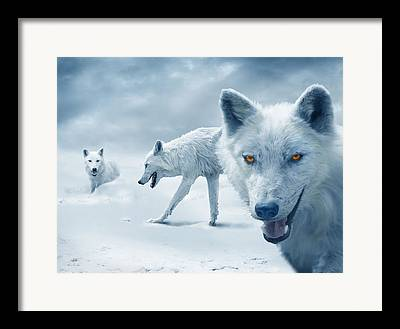 Arctic Wolf Framed Prints