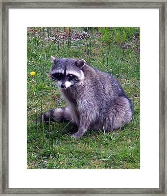 Are You Looking At Me... Framed Print by Nick Gustafson