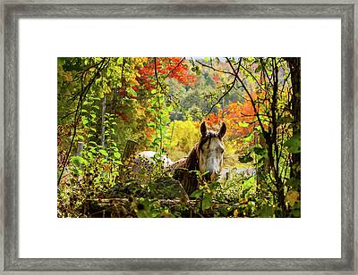 Framed Print featuring the photograph Are You My Friend? by Jeff Folger