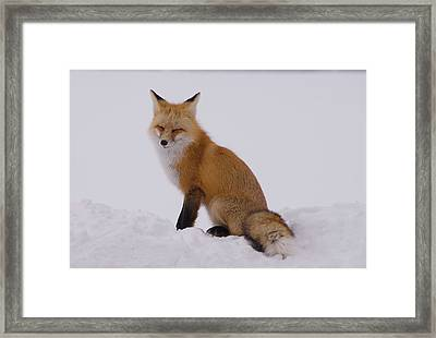 Are You Sleeping Framed Print