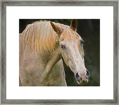 Are You Taking My Picture Framed Print by Susan Leggett