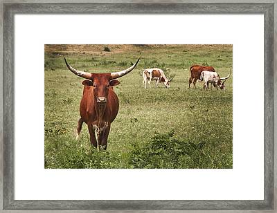 Are You Talking To Me Framed Print by Tamyra Ayles