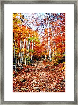Arethusa Falls Trail Framed Print