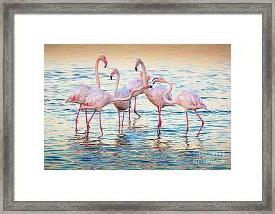 Arguing Flamingos Framed Print by Inge Johnsson