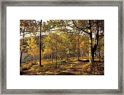 Argyll And Bute, Scotland Path Through Framed Print by John Short
