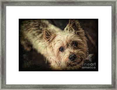Arigato Framed Print by Lynn Sprowl