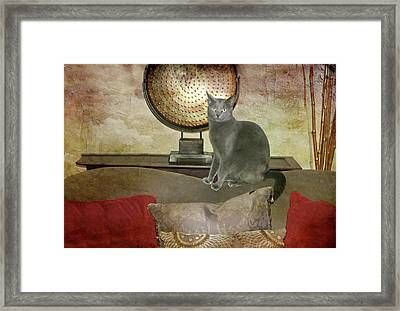 Cat-tastic Framed Print by Diana Angstadt