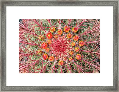 Arizona Barrel Cactus Framed Print by Delphimages Photo Creations