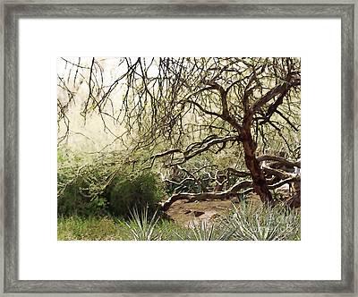 Arizona Desert Garden Framed Print by Linda Parker