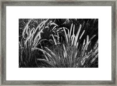 Arizona Desert Grasses Framed Print