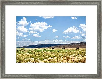 Arizona Desert Horses Framed Print by Ryan Kelly