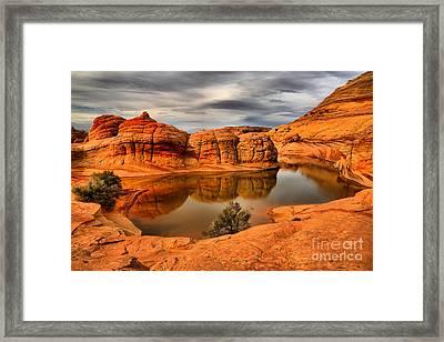 Arizona Desert Life Framed Print by Adam Jewell