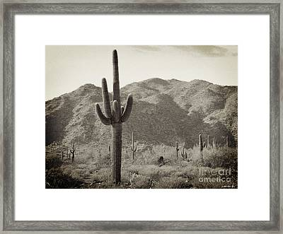 Arizona Desert Framed Print by Methune Hively