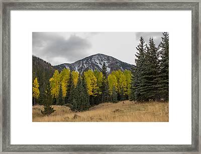 Arizona Fall Framed Print by Bill Cantey