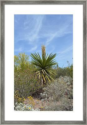Arizona Landscape Framed Print by Aimee L Maher Photography and Art Visit ALMGallerydotcom