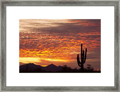 Arizona November Sunrise With Saguaro   Framed Print by James BO  Insogna
