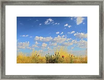 Arizona Sky And Golden Grass Framed Print