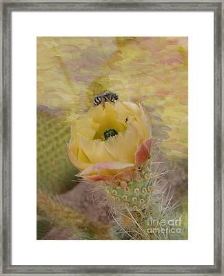 Arizona Spring Beauty Framed Print