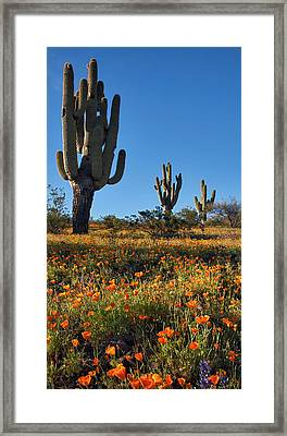 Framed Print featuring the photograph Arizona Spring Flowers And Blossoms With Saguaro Cactus by Dave Dilli