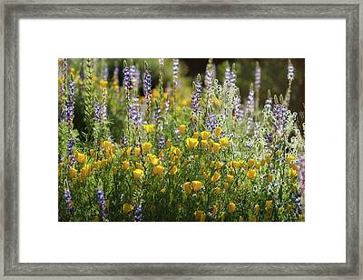 Framed Print featuring the photograph Arizona Spring Wildflowers  by Saija Lehtonen