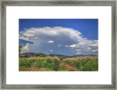Arizona Summer Framed Print by Donna Kennedy