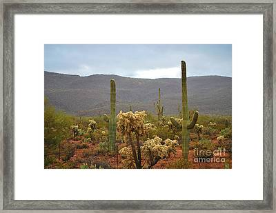 Arizona's Sonoran Desert  Framed Print