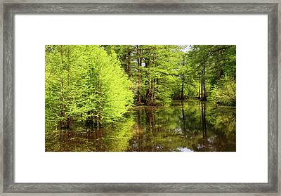 Framed Print featuring the photograph Arkansas Bottomlands by Nicholas Blackwell