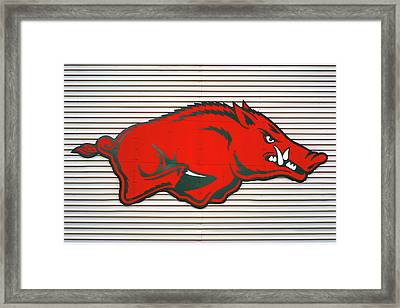 Arkansas Razorback On Metal Framed Print by Gregory Ballos
