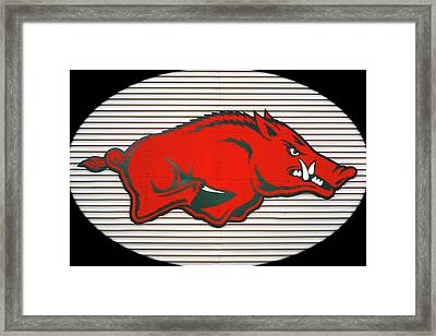 Arkansas Razorback On Metal With Black Border Framed Print by Gregory Ballos