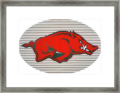 Arkansas Razorback On Metal With White Border Framed Print by Gregory Ballos
