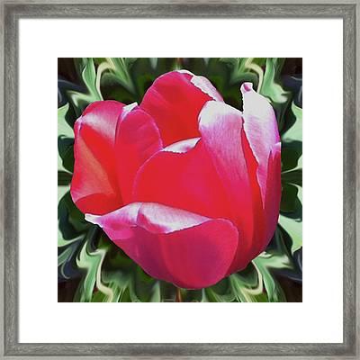 Arlington Tulip Framed Print