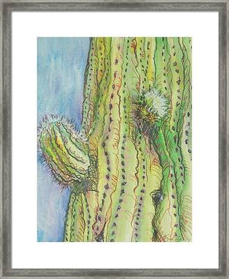 Arm Bud Framed Print by Sandy Tracey
