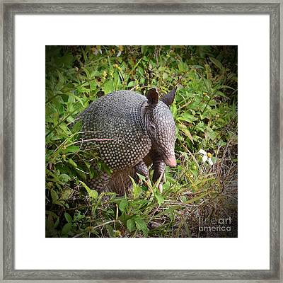 Armadillo And Flower Framed Print