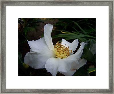Arms To Heaven Framed Print by Sandy Collier