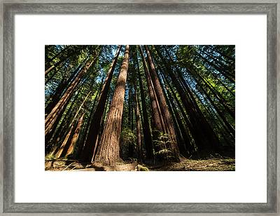 Armstrong National Park Redwoods Filtered Sun Framed Print by Toby McGuire