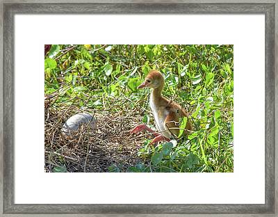 Are You Coming Out? Framed Print
