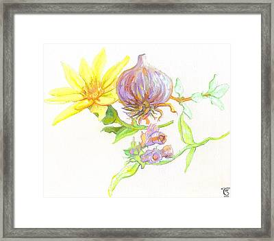 Arnica Garlic Thyme And Comfrey Framed Print by Cameron Hampton PSA