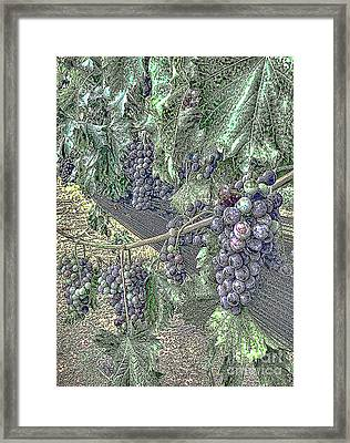 Arrington Grapes Framed Print