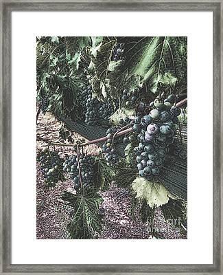 Arrington Vineyards Splendor Framed Print