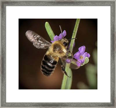 Framed Print featuring the photograph Arrival by Len Romanick