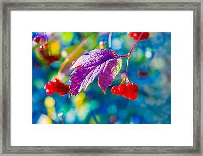 Arrowwood Beauty Framed Print