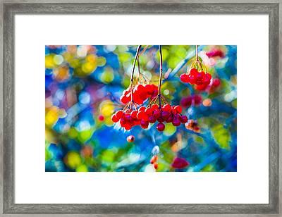 Framed Print featuring the photograph Arrowwood Berries Abstract by Alexander Senin