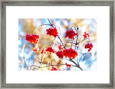 Framed Print featuring the photograph Arrowwood Berries by Alexander Senin