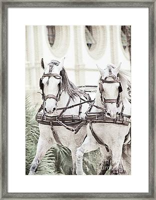 Art Ancient Potrait Of Wonderful Carriage White Horses In Moveme Framed Print