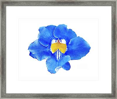 Art Blue Beauty Framed Print